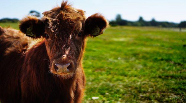 alternative livestock