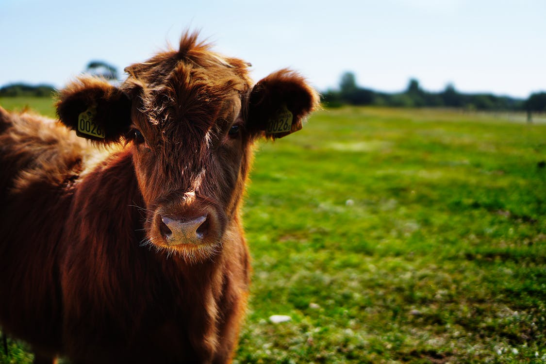 Alternative Livestock for Your Small Farm
